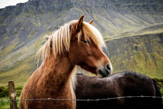 animal-animal-photography-barb-wires-cavalry-614505